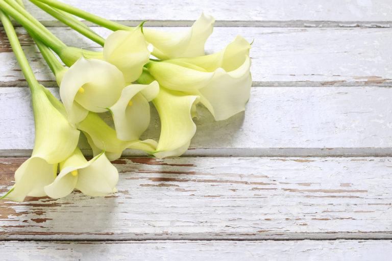 Bouquet of white calla flowers (Zantedeschia) on white wooden table, copy space