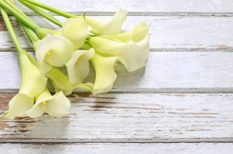 Bouquet of white calla flowers (Zantedeschia) on white wooden table, copy space